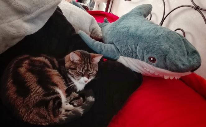 Shark_LaGrecchi